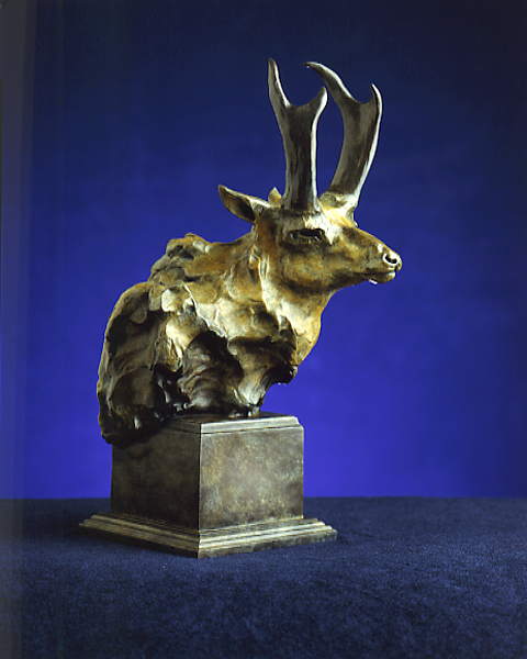 AntelopeBustWeb