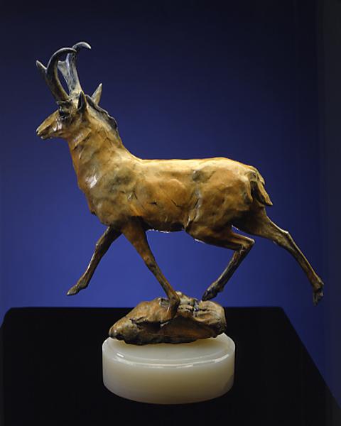 AntelopeWeb